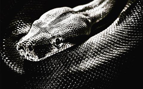 兰迪推特发文遭邪神嘲讽,一条可怜的小蛇?